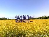 畯禹不動產經紀有限公司提供,桃園縣新屋鄉●農地●新屋槺榔農地售農地662.8萬